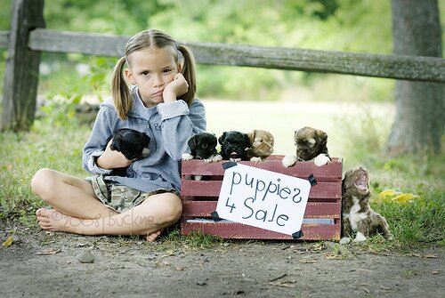 Puppies 4 Sale by EightJs.